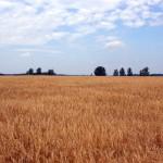 land banking